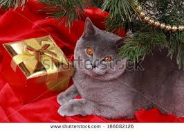 Fun Rooms  Awesome Tree Christmas Decorations With Cute Ball And Cat Themed Christmas Tree