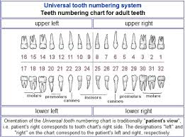 How To Count Teeth Chart 59 Right Tooth Chart Left Side