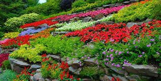 colorful flowers terraced hillside garden design calimesa ca
