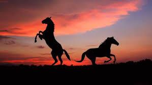 New Wallpapers Hd Horses Wallpaper Hd New Tab Horse Themes Hd Wallpapers