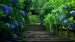 Garden 照片Nature 桌面图片高清晰度电视 ...
