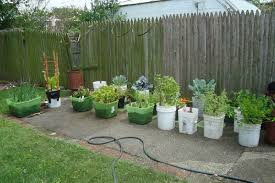 Small Picture Planting A Vegetable Garden In The Desert Best Garden Reference