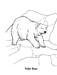 Small Picture Kids Polar Bear Color Pages To Print Animal Coloring pages of