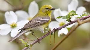"""Résultat de recherche d'images pour """"image animaux oiseaux"""""""