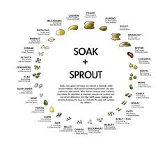 Your Guide To Soaking Sprouting Whole Grains Beans Nuts