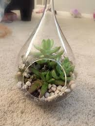 diy hanging globe and geo terrariums terraria terrarium diy and plants