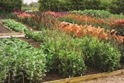 how to lay out a garden. View Full Post How To Layout A Vegetable Garden Lay Out