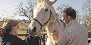 Melanoma Implications In Prepurchase Exams The Horse