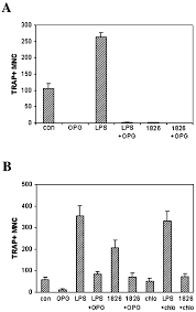 Lps Design Associates Modulation Of Odn 1826 And Lps Induced Osteoclastogenesis By