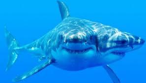shark on grandma shark attach shark funny grandma funny funny