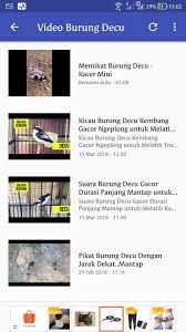 Mengenal jenis burung decu, makanan, dan. Suara Burung Decu Lengkap For Android Apk Download