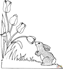 Tulip Coloring Page Pages Coloring Pages