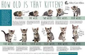 Kitten Size Chart By Month Bedowntowndaytona Com
