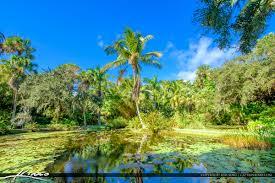 pond and lilypads mckee botanical garden vero beach florida