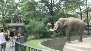elephant spraying poo on man original at berlin zoo