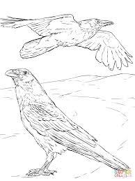 Small Picture Ravens coloring pages Free Coloring Pages