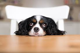 training problems options what size dog bed for a cavalier king charles spaniel