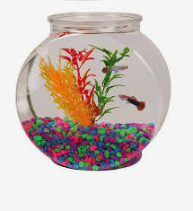 How To Decorate Fish Bowl