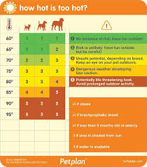 Hot Weather Pet Safety Tips Animal Refuge League Of