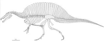 Small Picture Coloring Spinosaurus Coloring Pages Printable For Pages