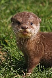 Small Picture Otter Pictures Kids Search