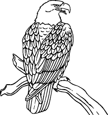 Small Picture Bird coloring pages eagle perched ColoringStar