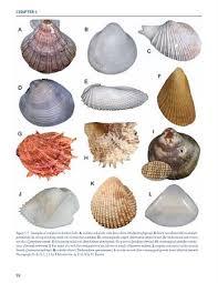 Clam Identification Chart Seashell Identification Shell Identification Chart Book