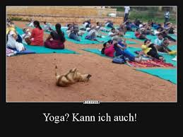 Yoga Kann Ich Auch Lustige Bilder Sprüche Witze Echt Lustig