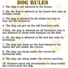 dog rules story of my life
