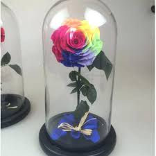 preserved flowers beauty the beast enchanted rose rainbow dome hot everything else on and flower amazon