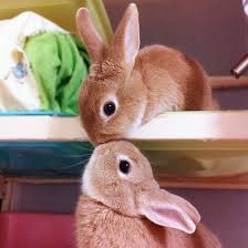 kittens and puppies and bunnies and hamsters and monkeys. Modren And Love Bunnies Picture Throughout Kittens And Puppies Hamsters Monkeys S
