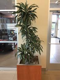 Peabody Light Plant Pdi Plants Blog Acura Of Peabody Ma Accentuates Their Auto
