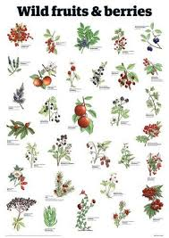 Fruit Tree Identification Chart Edible Medicinal Flower Plant Chart Yahoo Image Search