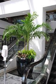office greenery. Plain Greenery Interior Plants Create A Working Atmosphere Office Productivity Increases  With Intierior Plants Throughout Greenery