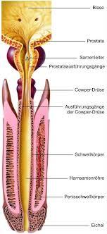 harn samen röhre