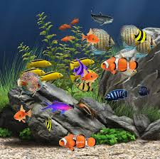 Just click the download button and the gif from the and wallpaper collection will be downloaded to your device. 329 Fish Gifs Gif Abyss