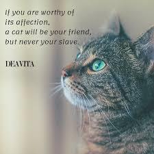 Spruche Katzen