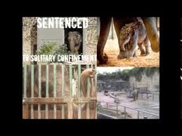 Negative effects of animal zoos   Astrud Gilberto   Official Homepage