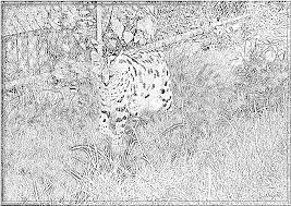 Small Picture Baby Serval Coloring Coloring Pages