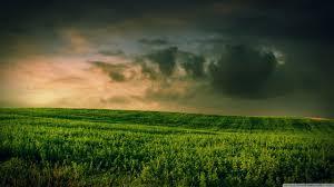 green grass field. Standard Green Grass Field N