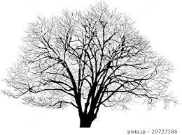 ハルニレの木のイラスト素材 20727586 Pixta