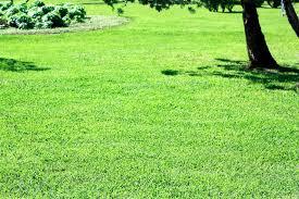 Rasenfläche Fotolia Nachgeharkt Eine Gepflegte Rasenfläche Die Anlage Einer Eine Schrittfürschrittanleitung