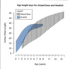 Striped Bass Facts