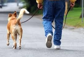 el arte de pasear un perro corre
