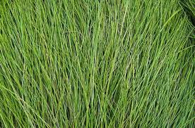 tall grass texture seamless. Delighful Tall Free Grass Textures For Tall Grass Texture Seamless M