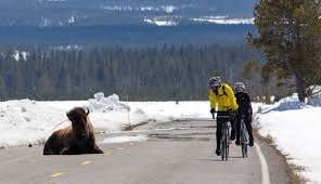 spring bicycling from west yellowstone in april