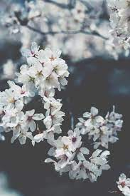 Soft Flowers Pictures