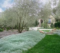 Artemisia Landscape Design Love This Combination Of Greens Olive And Artemisia