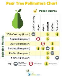 Moonglow Pear Pollination Chart Pear Tree Pollinators Chart Fruit Bearing Trees Trees