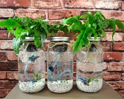 hydroponic herb garden. 🔎zoom Hydroponic Herb Garden